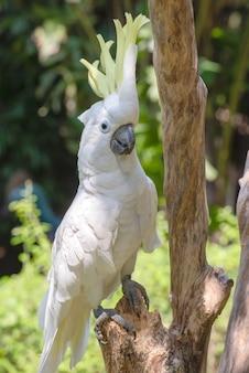 Perroquet blanc sur une branche d'arbre