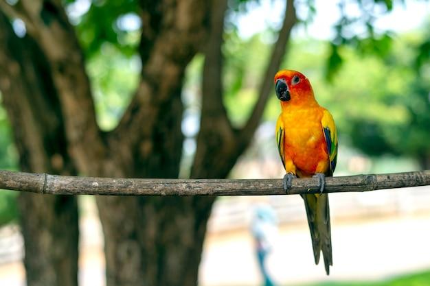 Perroquet sur une branche d'arbre