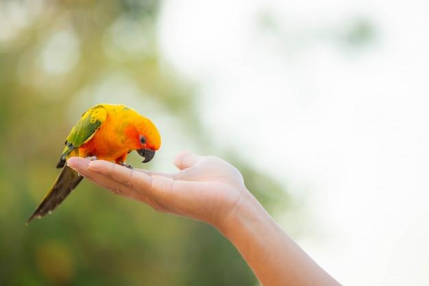 Perroquet canin et oiseau mignon