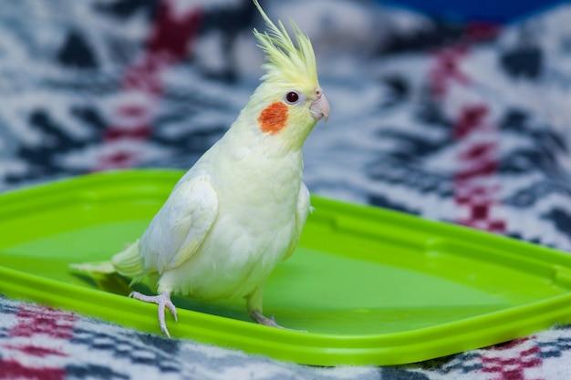 Un perroquet corella jaune avec des joues rouges et de longues plumes assis sur le lit