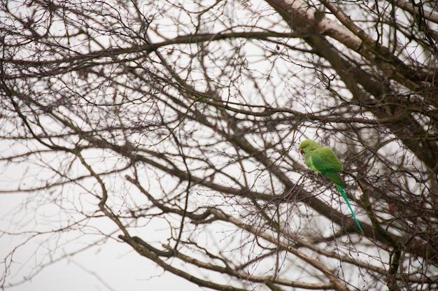 Un perroquet dans un arbre