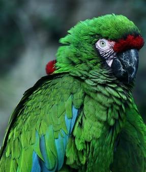 Perroquet dans le zoo