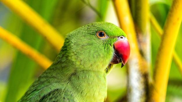 Perroquet exotique dans la forêt tropicale. maldives. la nature sauvage.