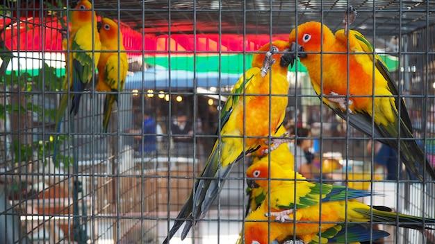 Perroquet jaune et orange dans une cage dans un parc public. jandaya parakeet.
