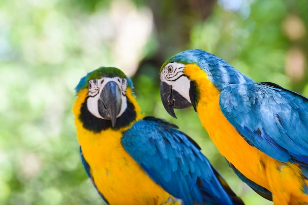 Perroquet oiseau ara sur branche arbre