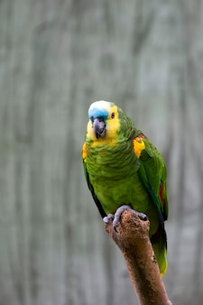 Perroquet vert ara, sur un arbre