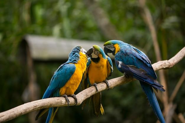 Perroquets colorés sur une branche
