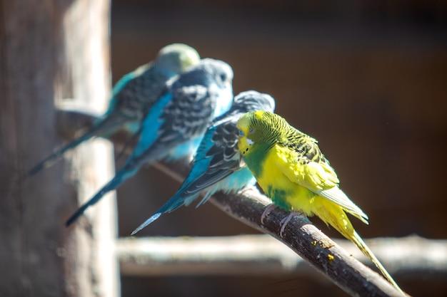 Perroquets colorés dans une cage dans un zoo.