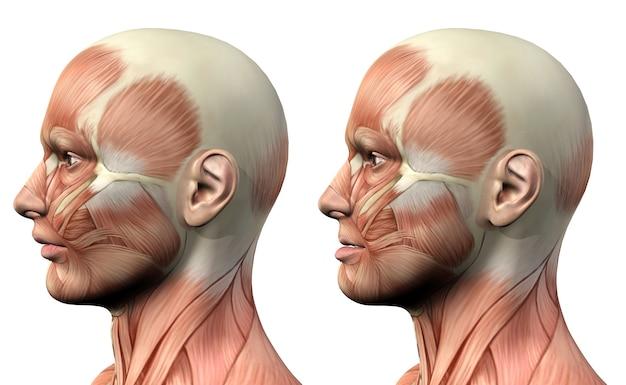 Personnage médical masculin 3d montrant la protusion et la rétrusion de la mandibule