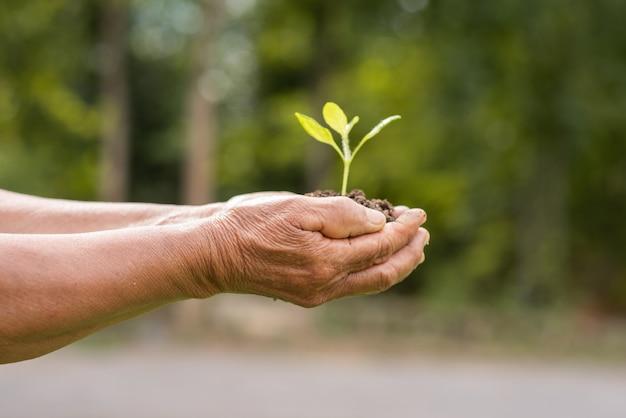 Personne âgée tenant une plante