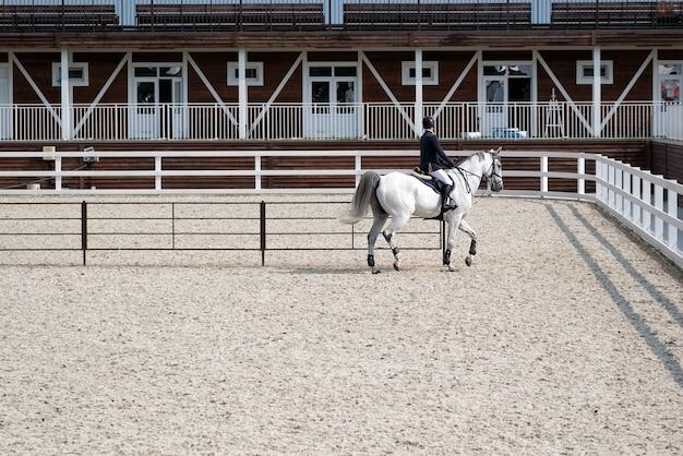Une personne entraîne un cheval blanc dans une arène couverte de sable. equitation, sport hippique