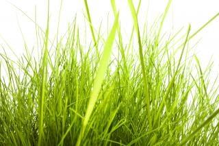 Personne ne l'herbe