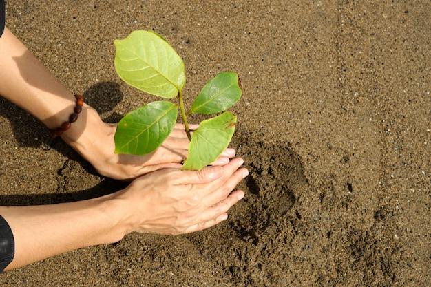 Une personne plante une mangrove