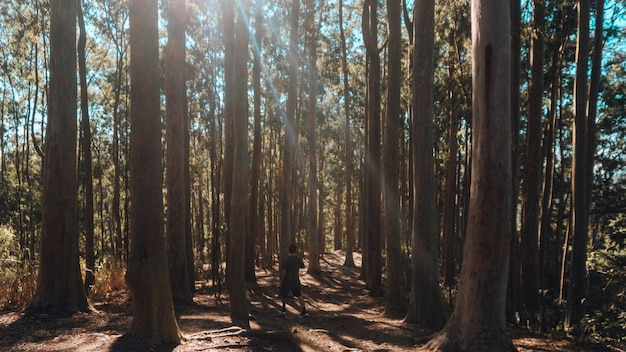 Personne seule, faire des exercices du matin dans une forêt par une journée ensoleillée