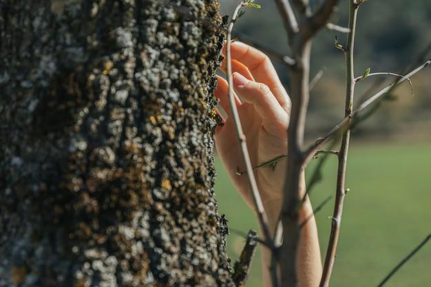 Personne, toucher, tronc arbre