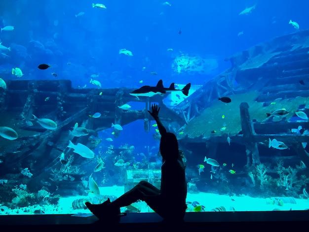 Personnes observant des poissons à l'aquarium
