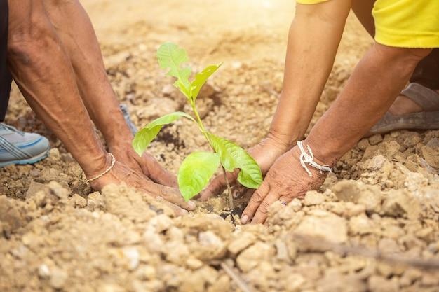 Personnes plantant l'arbre pour célébrer l'anniversaire du roi de thaïlande