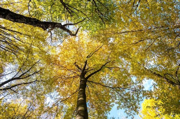 Perspective de bas en haut de la forêt d'automne avec des feuilles orange et jaune vif