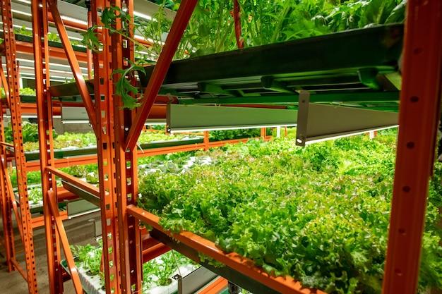 Perspective des semis verts de diverses sortes de laitue ou d'épinards poussant sur des étagères à l'intérieur d'une grande ferme ou serre verticale contemporaine