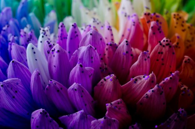 Pétales de dahlias couleur arc-en-ciel.