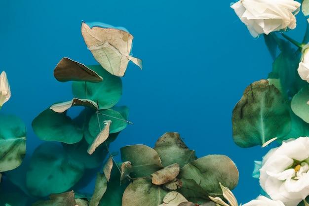 Pétales et feuilles dans l'eau bleue