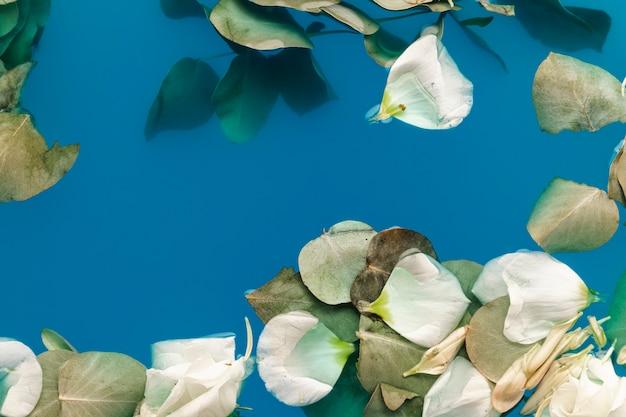 Pétales et feuilles plates dans l'eau bleue