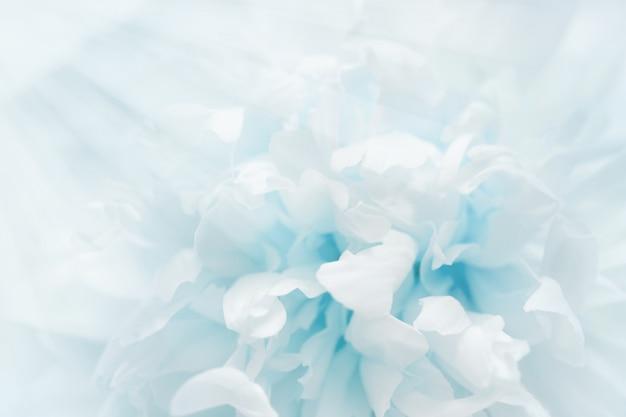 Pétales de fleur remplis de lumière.