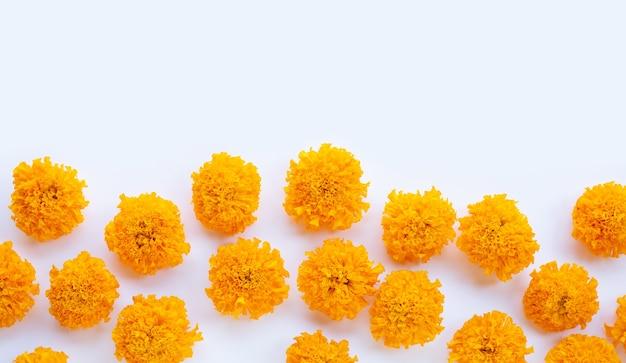 Pétales de fleur de souci sur blanc