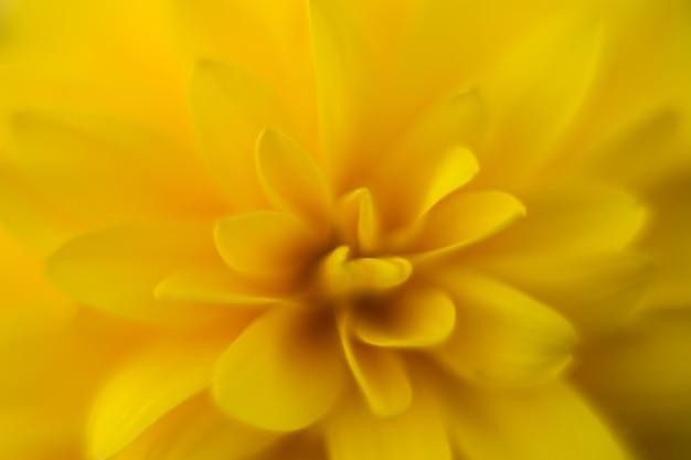 Pétales de fleurs bouchent macro photographie, fond de fleur