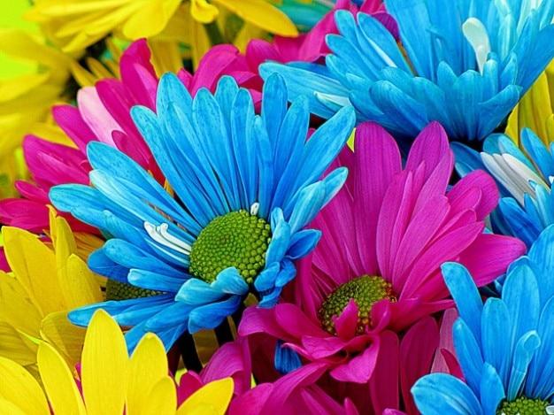 Pétales de fleurs coloré fleur nature daisys