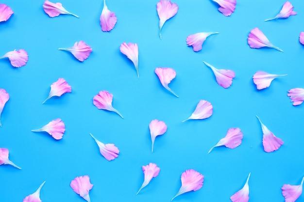 Pétales de fleurs d'oeillets sur fond bleu.