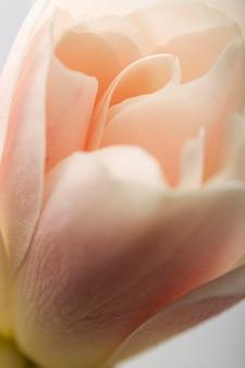 Pétales de fleurs rose pastel gros plan