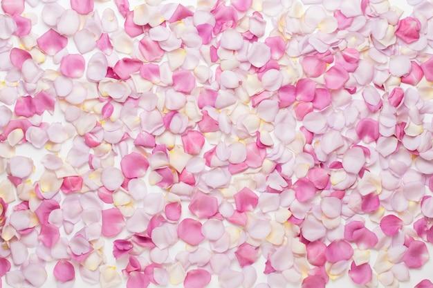 Pétales de fleurs roses pastel sur fond blanc. mise à plat, vue de dessus, espace de copie.