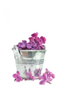 Pétales de lilas pourpres