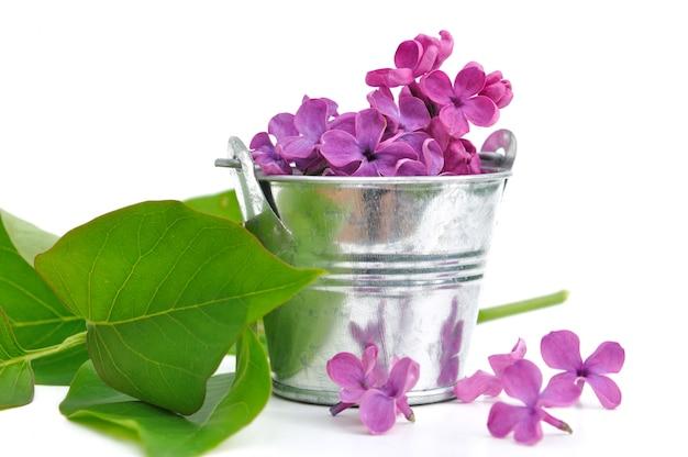 Pétales de lilas