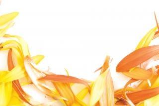 Pétales, orange