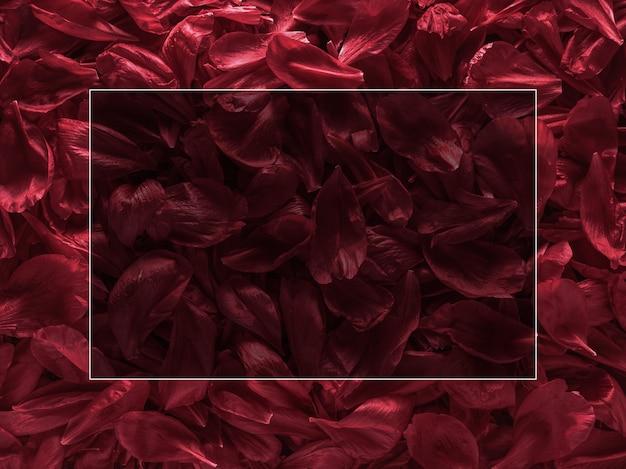 Pétales de pivoine rouge bourgogne