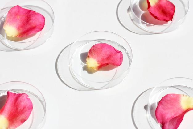 Pétales de rose dans des boîtes de pétri sur fond blanc.