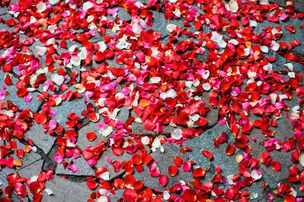 Des pétales de rose éparpillés sur le trottoir