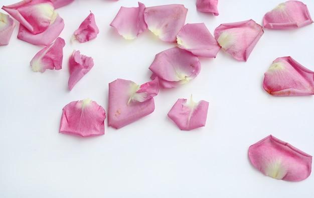 Pétales de rose fleur rose