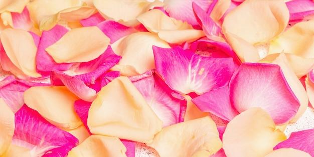 Pétales de rose frais éparpillés sur fond de plâtre. fleurs multicolores, concept festif ou romantique. tendance beauté ou spa, couleurs douces, bannière
