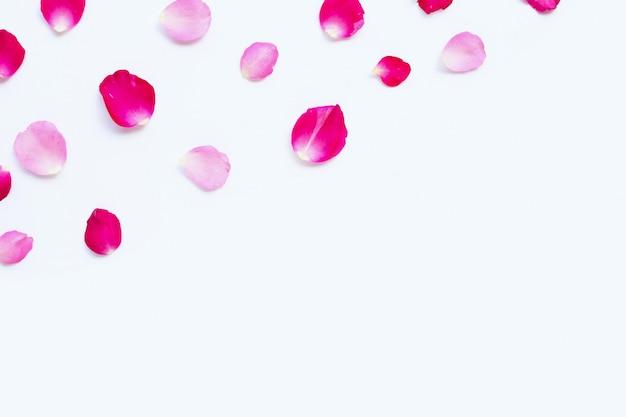 Pétales de rose isolés sur blanc.