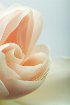 Pétales rose pastel gros plan