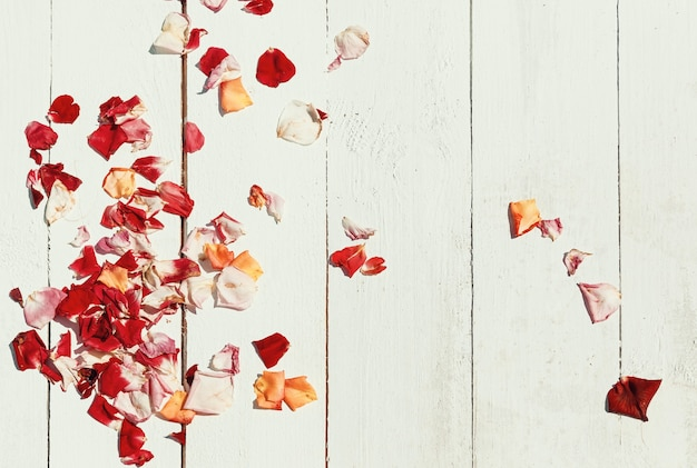 Pétales de rose rouges sur fond de bois blanc pétales de rose sur fond de bois