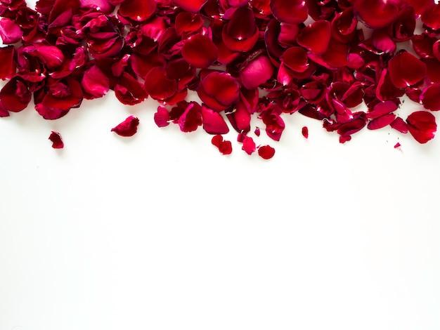 Pétales de rose rouges romantiques sur fond blanc