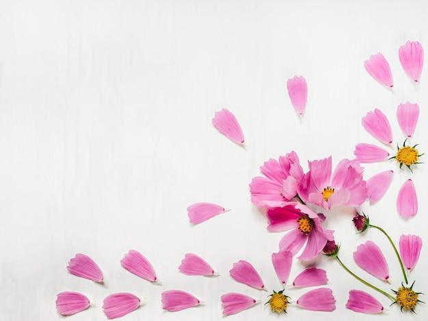 Pétales roses d'une belle fleur