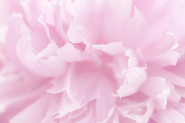 Pétales roses avec mise au point floue
