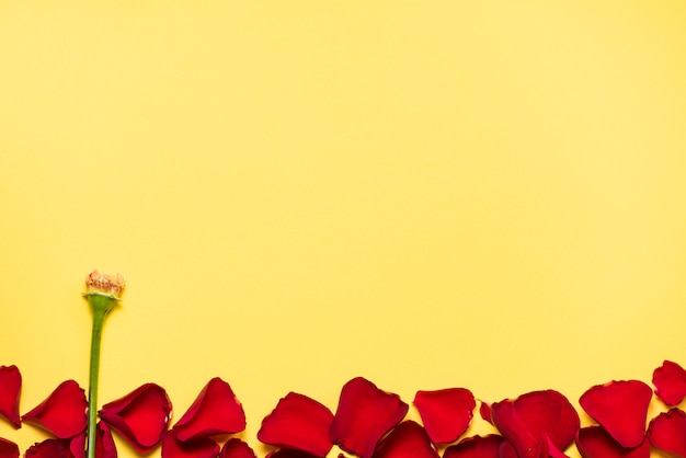 Pétales de roses rouges avec une branche verte sur la table