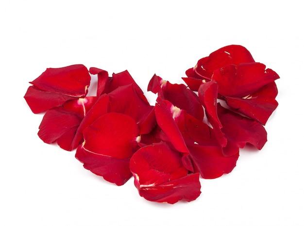 Pétales de roses rouges éparpillés sur le sol, isolés