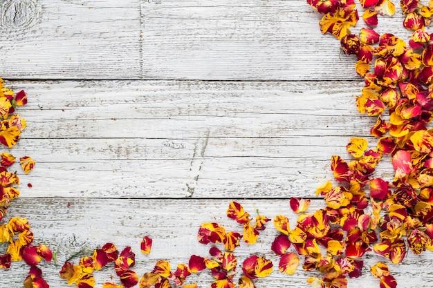 Pétales secs de rose sur un mur en bois blanc